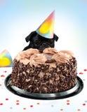 Bolo de aniversário do Pug Imagem de Stock Royalty Free