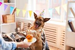 Bolo de aniversário para o cão imagens de stock royalty free