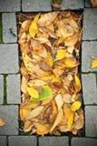 Bolo do outono Fotografia de Stock