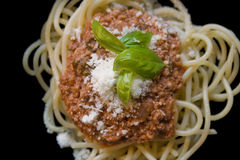 Bolognese Stock Photography
