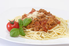 Bolognese 2 Stock Photos