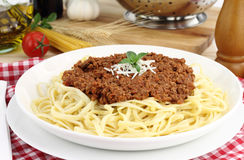 Bolognese Royalty Free Stock Image
