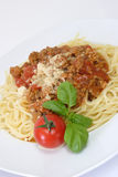 Bolognese Royalty Free Stock Photography