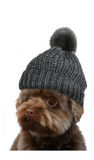 Bolonka with bobble hat Stock Image