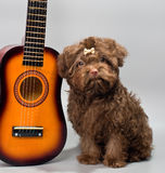 Bolonka ZWETNA met gitaar stock afbeeldingen