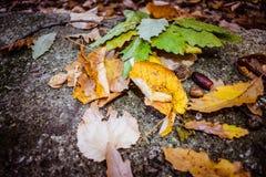 Bolota e folhas caídas Fotografia de Stock