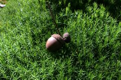 Bolota no musgo da floresta fotografia de stock