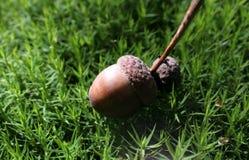 Bolota no musgo da floresta fotografia de stock royalty free