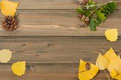Bolotas do carvalho, cone do pinho, Autumn Leaves Tabela de madeira Imagem de Stock