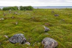 Tundra vegetation on the Bolshoy Zayatsky Island. Bolshoy Zayatsky Island. Solovetsky archipelago, White sea, Russia stock photos