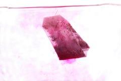 Bolsita de té roja en agua caliente Imagen de archivo