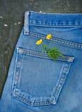 Bolso das calças de brim com ramo da planta no fundo de madeira velho Modelo para o projeto foto de stock royalty free