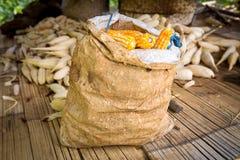 Bolso del maíz Imagen de archivo libre de regalías