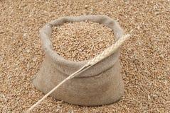 Bolso del trigo. Fotografía de archivo
