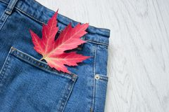 Bolso traseiro das calças de brim Folha de plátano vermelha conceito elegante Imagens de Stock