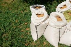 Bolsos con el primer del trigo Trigo en un bolso bolsos de nylon foto de archivo