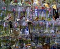 Bolsos de los pescados para la venta Fotografía de archivo