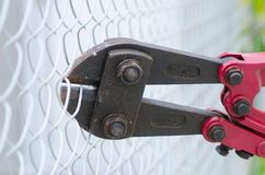 Bolt cutter clipping fence close up Royalty Free Stock Image