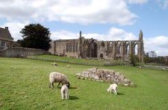 Bolton abbey zdjęcia royalty free