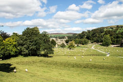 Bolton Abbey. And flock of Sheep in the fields. , Wharfedale, North Yorkshire Royalty Free Stock Photography