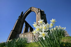 Bolton Abbey, North Yorkshire. The ruins of the Augustinian Priory at Bolton Abbey in Yorkshire, England, an English Heritage site. Spring sunshine with Royalty Free Stock Photo