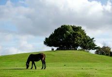 Boltons bänk i ny skog Royaltyfria Foton