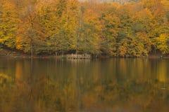 Bolu - Yedigöller sju sjönationalpark Royaltyfria Bilder