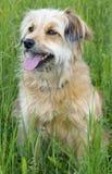 Bom cão Imagens de Stock