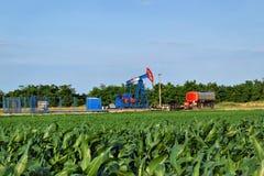 Bomba de aceite de Horsehead en el medio de una granja del maíz fotos de archivo libres de regalías