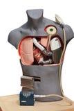 Bomba do coração artificial imagens de stock