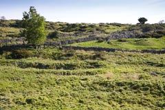 Bombardee los campos ahuecados en las colinas de Mendips en Somerset Foto de archivo