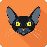 Bombay Black Cat icon flat design Stock Image