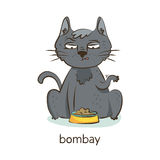 Bombay cat. Cat character  on white Stock Photo
