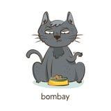 Bombay katt Katttecken på vit Arkivfoto