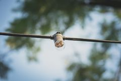 Bombilla clara en jardín Foto de archivo