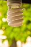 Bombilla de Eco Imagen de archivo libre de regalías