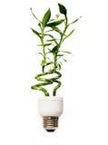 Bombilla de Eco con el bambú Foto de archivo libre de regalías