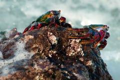 bombilla krabów losu angeles palma czerwieni skała Obrazy Royalty Free