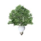 Bombilla y árbol Fotografía de archivo libre de regalías