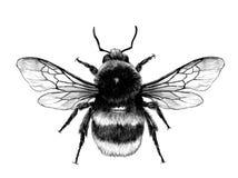 Bombo lanuginoso nella vista superiore gialla con le ali royalty illustrazione gratis