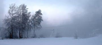 Bomen 1 Stock Afbeeldingen