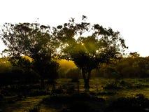 Bomen Stock Fotografie
