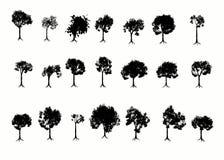Bomen. Stock Afbeeldingen