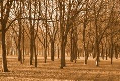 Bomen stock foto