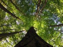 Bomen Royalty-vrije Stock Foto