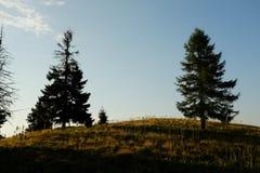 2 bomen Stock Afbeelding