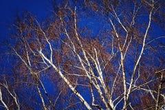 Bomen Royalty-vrije Stock Fotografie