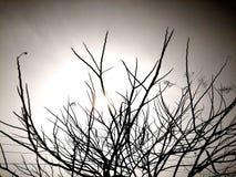 Bomen Stock Foto's