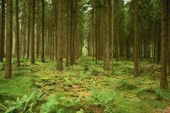 Bomen aan oneindigheid Stock Foto