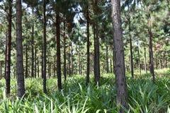 Bomen in aanplanting stock afbeelding